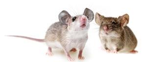orlando mice