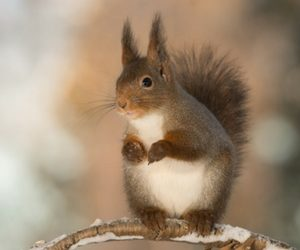 How To Get Rid Of Squirrels Critter Control Dallas