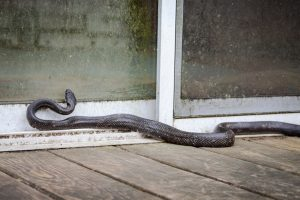 The Best Ways to Keep Snakes Away from Your Home
