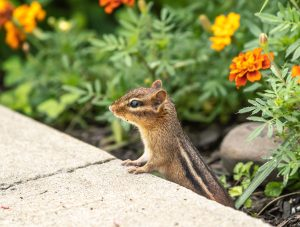 How to Keep Squirrels Out of My Garden