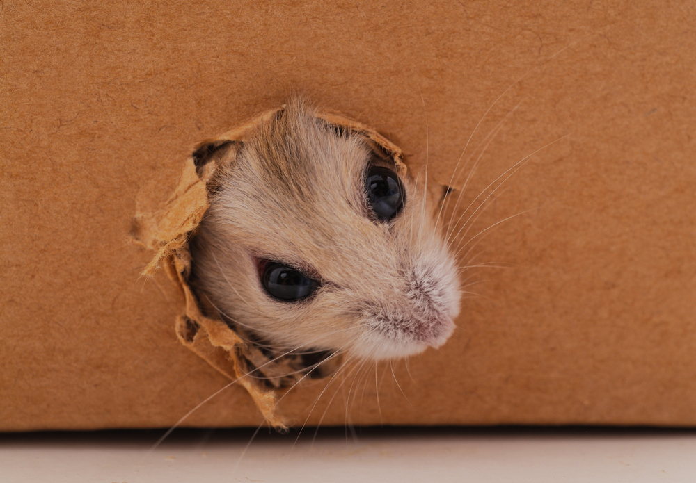 Do Cardboard Boxes Attract Rodents